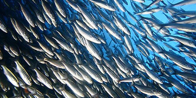 pescas-em-angola-caminha-para-a-autossuficiencia
