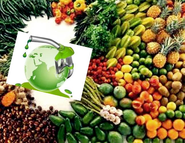 como-alimentar-o-mundo-e-ainda-produzir-biocombustiveis