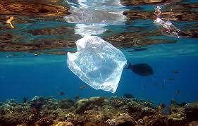 sacos plasticos
