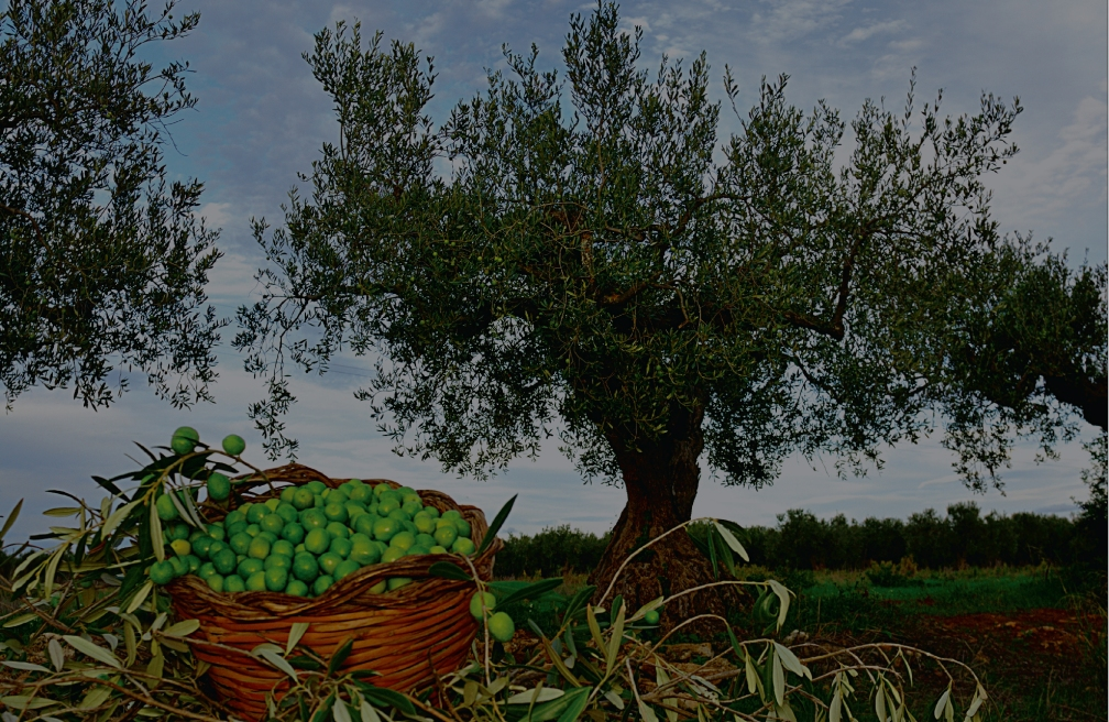 olivenza-depositphotos_14977385_original-01.jpg