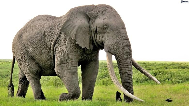 elefante-192060