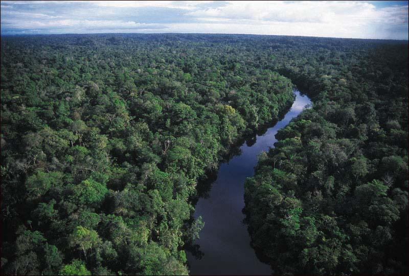 floresta-tropical-3