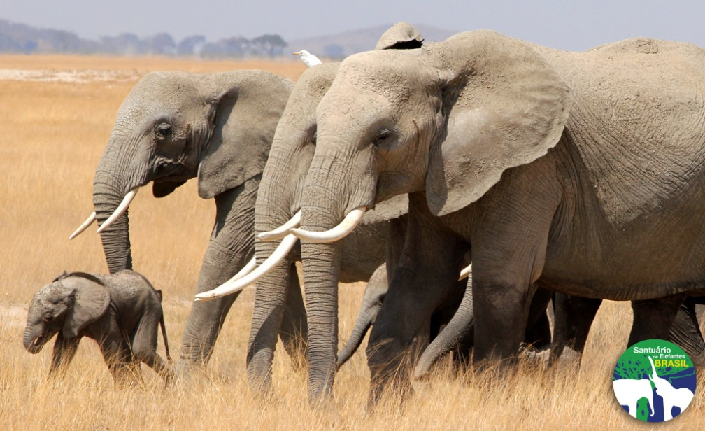 wallpaper_santuario_de_elefantes1