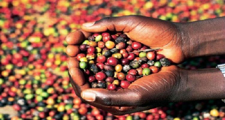 café-angola