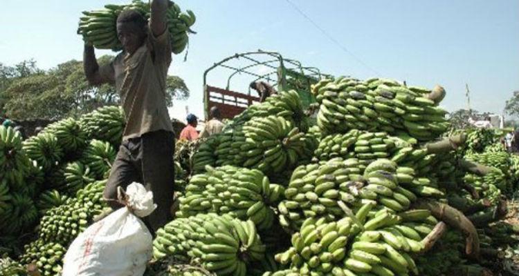 bananas-angola-itália.jpg