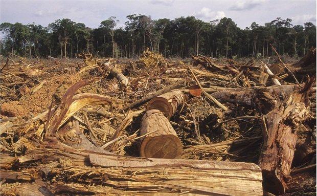 desmatamento-no-brasil-motivos-e-o-que-e-feito-contra-ele